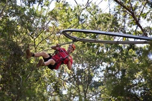 Treetops Crazy Rider